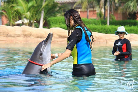 Proposal in dolphinarium